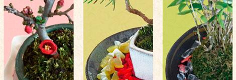 盆栽風水・苔玉風水